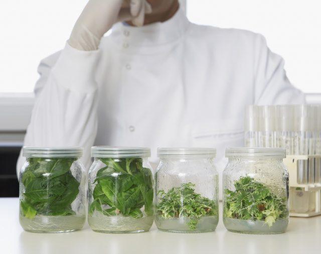 """Национална научна програма """"Здравословни храни за силна биоикономика и качество на живот"""""""