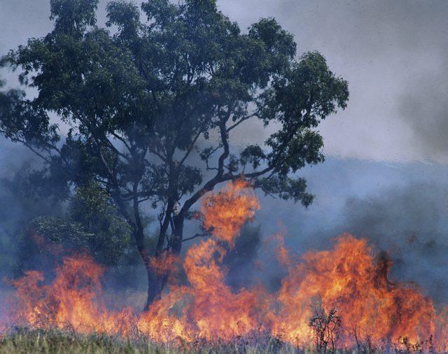"""""""Опазване на околната среда и намаляване на риска от неблагоприятни явления и природни бедствия"""""""