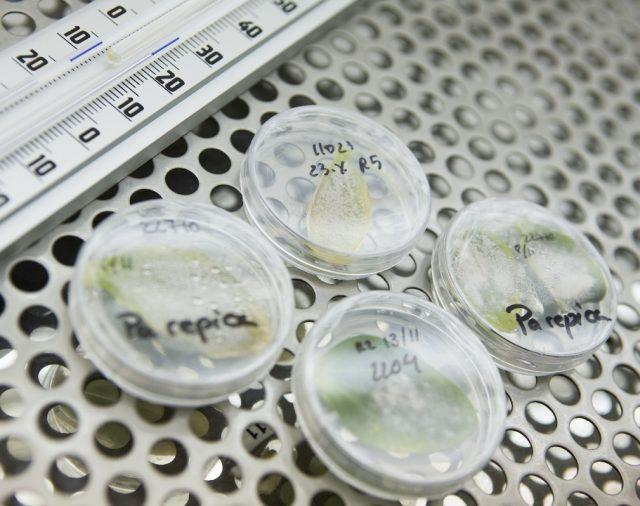 Център по растителна системна биология и биотехнология (ЦРСББ)